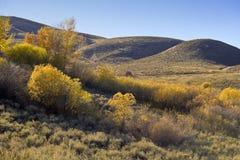 爱达荷风景植被 库存照片