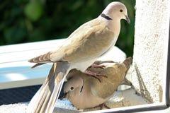 爱鸟和结构树 免版税库存图片