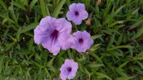 爱紫色 免版税图库摄影