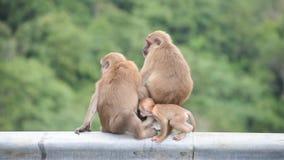 父亲、母亲和小猴子坐阻拦路背景绿色叶子的篱芭 影视素材