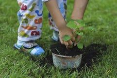 父亲和儿子树木种植 免版税库存图片
