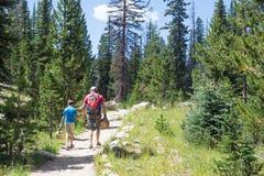父亲和儿子沿足迹手拉手进入森林  图库摄影