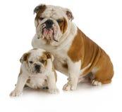 父亲和儿子狗 库存照片