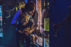 父亲和儿子看在水族馆的鱼在oceanarium 免版税图库摄影