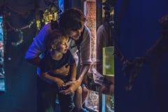 父亲和儿子看在水族馆的鱼在oceanarium 库存图片