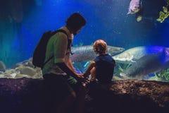 父亲和儿子看在水族馆的鱼在oceanarium 库存照片