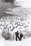 父亲和儿子饲料鸭子 免版税库存照片
