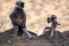 父亲和儿子猴子休假 库存图片