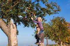 父亲和女儿采摘苹果秋天或秋天 库存照片