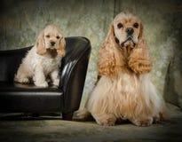 父亲和小狗 库存照片