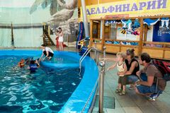 年轻父母显示给海豚的小儿子在delphinarium 库存图片