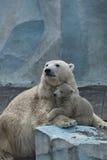 父母lyubov 新西伯利亚州动物园春天 免版税图库摄影