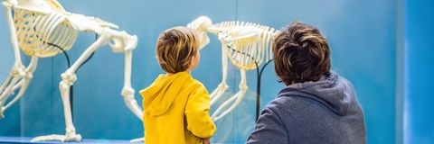 爸爸和儿子观看古老和现代人的骨骼 人类演变是调优过程那 库存照片