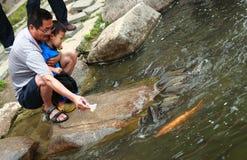 爸爸和他的儿子喂养鱼 免版税库存照片