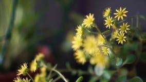 爽快小和嫩花卉生长户内