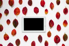 片剂个人计算机,在白色背景的红色秋叶装饰品的平的构成 图库摄影