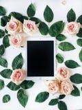 片剂和桃红色玫瑰开花与在白色背景的绿色叶子 免版税库存照片