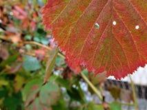 片断秋天在我们的五颜六色的叶子的土地 免版税库存照片