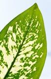 片段叶子工厂视窗 库存图片