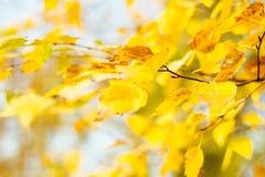 2008片秋天背景叶子10月黄色 库存图片