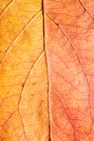 8片秋天背景eps文件包括的叶子 宏指令 库存照片