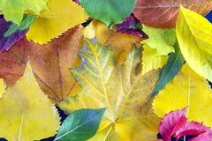 8片秋天背景eps文件包括的叶子 秋天fbstract背景 免版税图库摄影