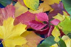 8片秋天背景eps文件包括的叶子 秋天fbstract背景 免版税库存图片