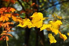 8片秋天背景eps文件包括的叶子 库存照片