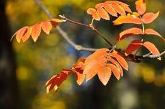 8片秋天背景eps文件包括的叶子 图库摄影