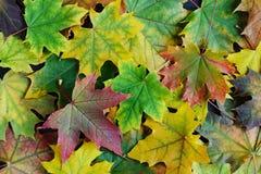8片秋天背景eps文件包括的叶子 免版税图库摄影