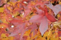 8片秋天背景eps文件包括的叶子 免版税库存照片