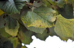 8片秋天背景eps文件包括的叶子 免版税库存图片