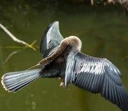 2片鸟沼泽地 库存图片