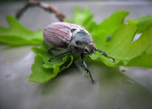 片刻从昆虫生活  图库摄影