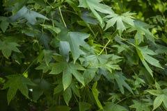 11片绿色叶子 免版税图库摄影