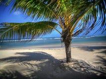 牙买加作梦 图库摄影