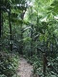 牙买加密林 免版税库存照片