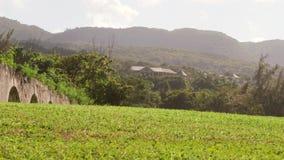 牙买加山国家边热带天堂 影视素材
