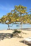 牙买加海滩和蓝色加勒比海 免版税图库摄影