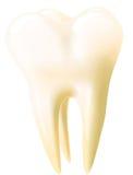 牙向量 库存图片