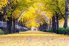 牙山,韩国- 11月9 :黄色银杏树树和游人行  免版税图库摄影
