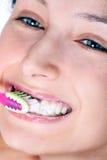 牙科医生没有 免版税库存照片