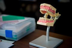 牙髓学的治疗实践的假牙模子 免版税图库摄影