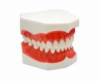 牙齿义肢 库存图片