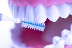 牙齿之间牙清洗刷子 图库摄影
