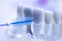 牙齿之间牙清洗刷子 库存照片