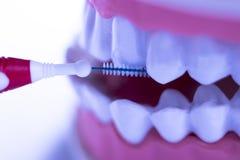 牙齿之间牙清洗刷子 免版税库存图片