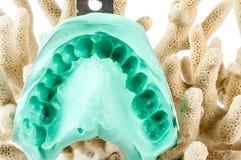 牙齿印象 免版税图库摄影