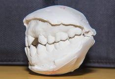 牙齿塑象 免版税库存照片