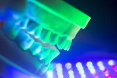 牙齿牙下颌模型 免版税库存图片